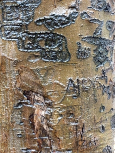 Carvings on a tree. They look like incantations in an unknown language.