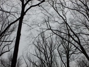 Gloomy sky, but what a great backdrop for these dramatic tree silhouettes.